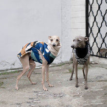 Load image into Gallery viewer, Italian greyhound coat