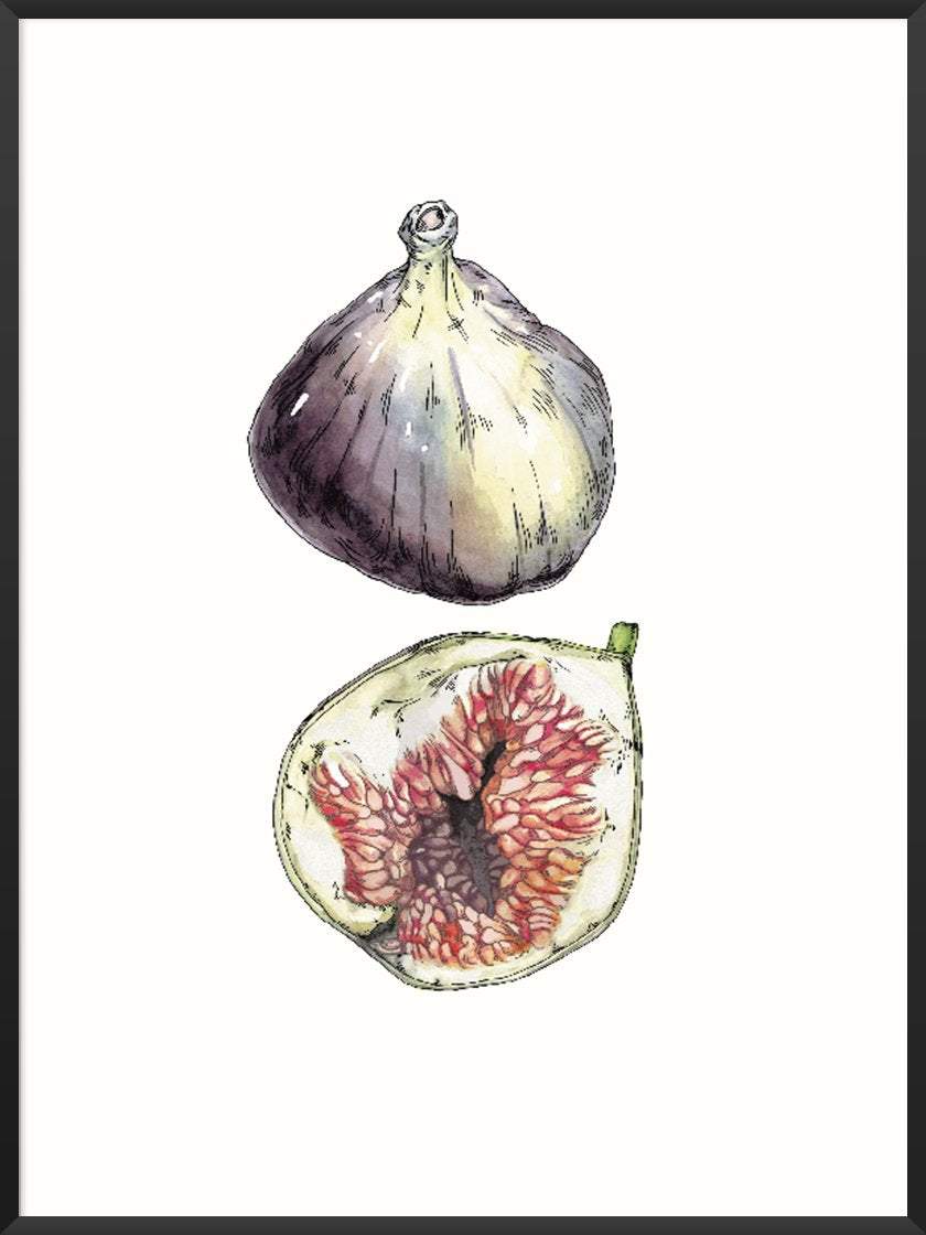 Figs - Hand-Painted Vintage Botanical Poster