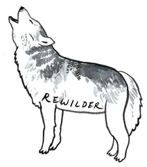 rewilding wolves of yellowstone national park