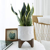 White Ceramic Plant Pot with Stand - 6.3 Inch Crescent Moon Embossed Cylinder White