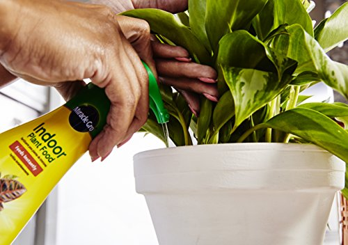Miracle-Gro Indoor Plant Food (Liquid), 8 oz., Instantly Feeds All Indoor Houseplants