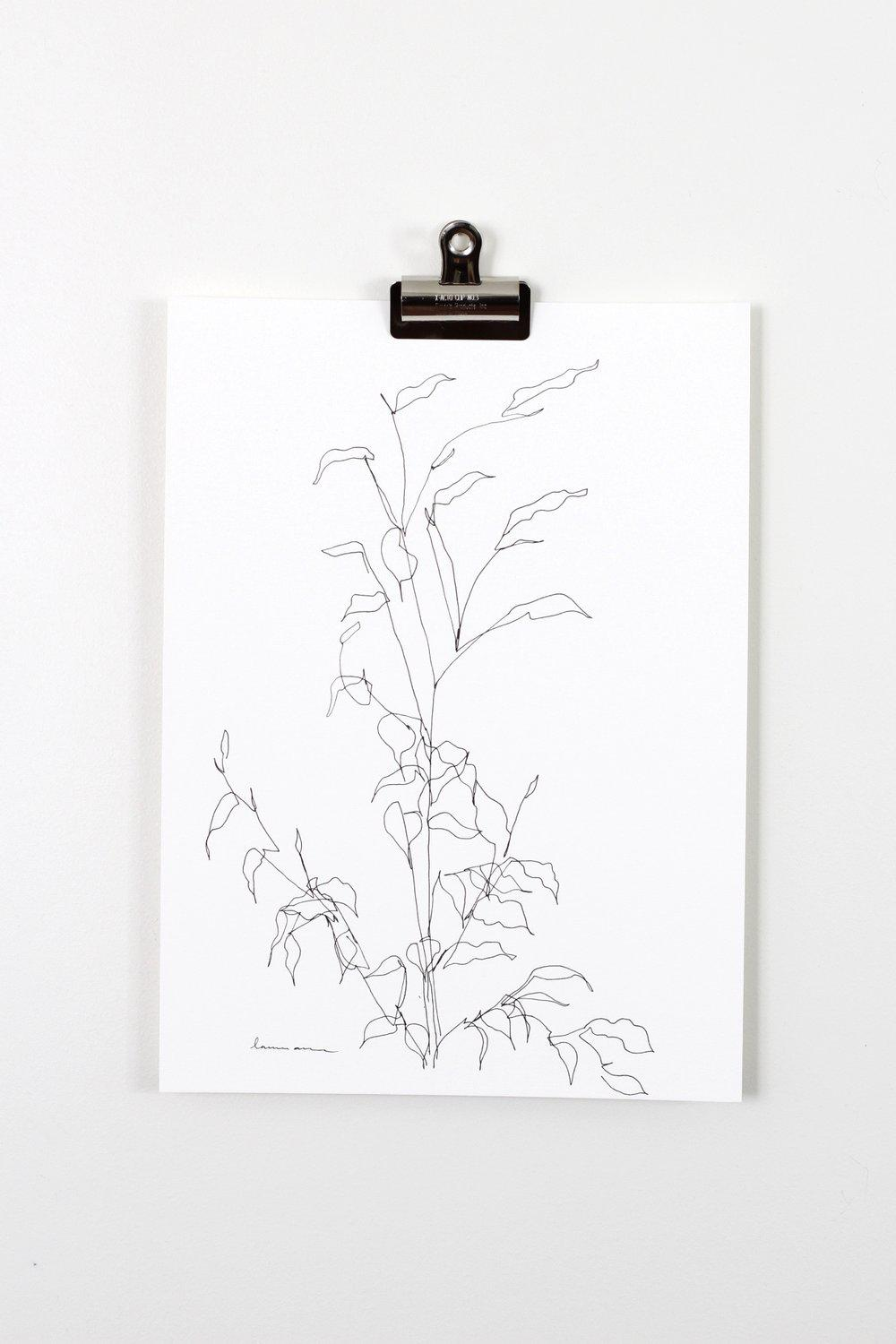 """Blind Contour Botanical Line Drawing 1"" 11x15"