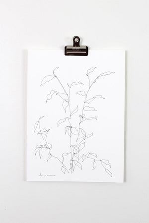 """Blind Contour Botanical Line Drawing 2"" 11x15"