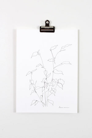 """Blind Contour Botanical Line Drawing 3"" 11x15"