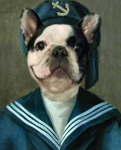 Mr. Sailor (pets)