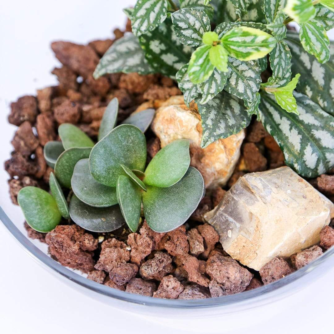 Shams El Balad Plants Copy of Mini Succulent Garden No. 2