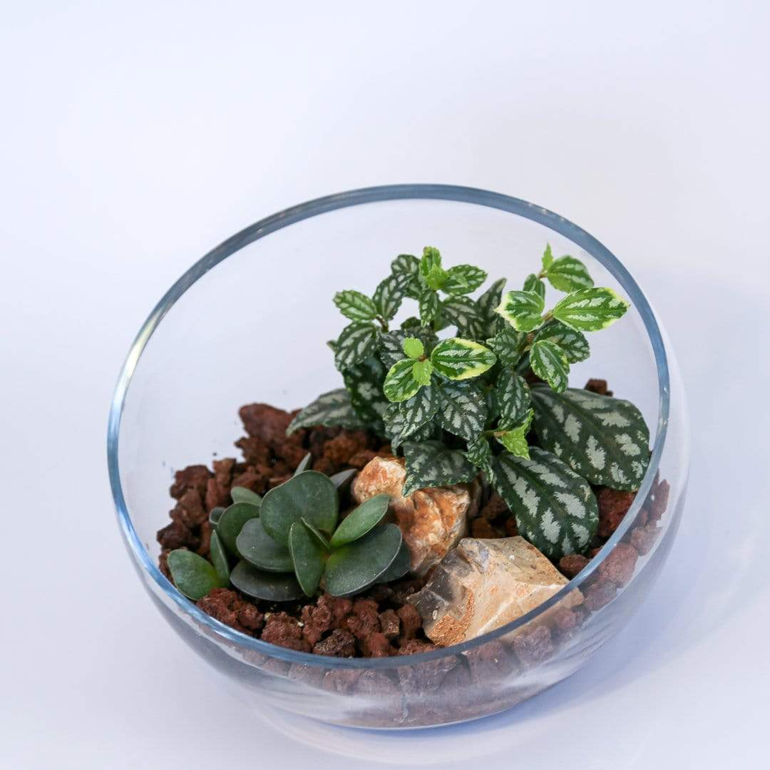 Shams El Balad Plants Mini Succulent Garden No. 2
