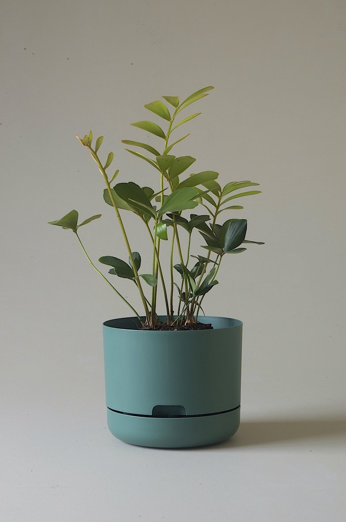 Mr Kitly- Self- Watering Plant pot 215mm (7 Variants)