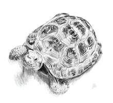 Load image into Gallery viewer, Tortoise
