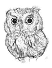 Load image into Gallery viewer, Screech Owl