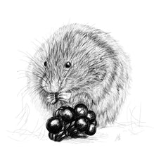 Load image into Gallery viewer, Vole