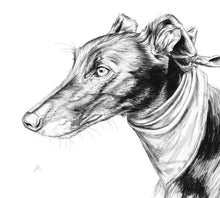 Load image into Gallery viewer, Greyhound