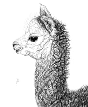 Load image into Gallery viewer, Alpaca
