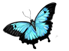 Load image into Gallery viewer, Ulysses Butterfly