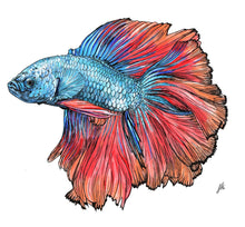 Load image into Gallery viewer, Siamese Fighting Fish