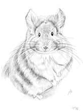 Load image into Gallery viewer, Chinchilla