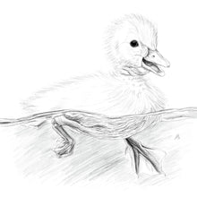 Load image into Gallery viewer, Duckling
