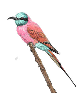 Nubian Bee Eater