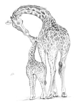 Load image into Gallery viewer, Giraffes