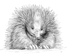 Load image into Gallery viewer, Echidna