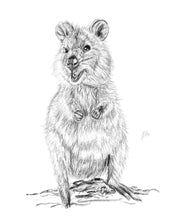 Load image into Gallery viewer, Quokka