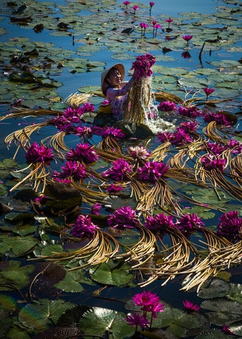 Lillies harvest