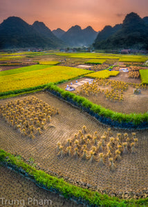 Sunset on Rice Paddies