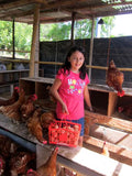 Family Chicken Farm Partnership (One-time Gift)