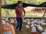 Annual Family Chicken Farm Partnership