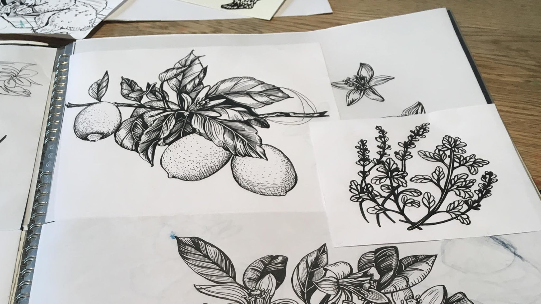 Drawings for the 'Lemon & Bergamot' soap