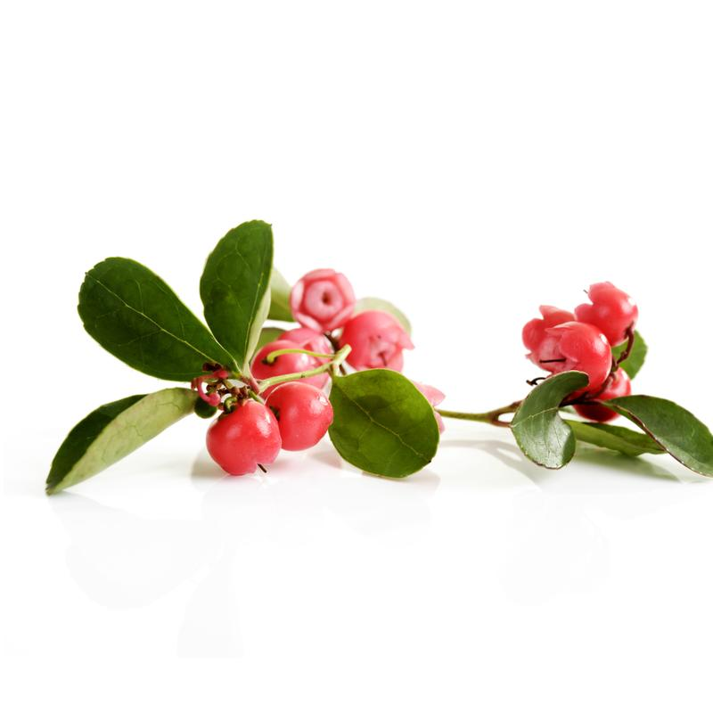 Essential Oil, Wintergreen