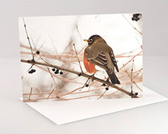 Snow Robin Greeting Card - Package of 3