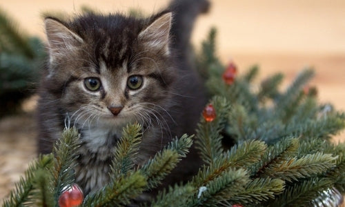Holiday Food Dangers for Dogs and Cats