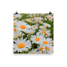 Load image into Gallery viewer, Summer Daisies Poster
