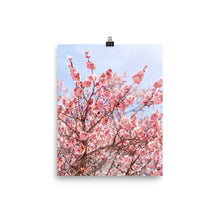 Load image into Gallery viewer, Pink Cherry Blossom Poster