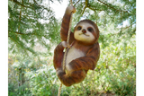 Dangling Tree Sloth