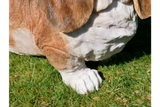 Resin Basset Hound Dog 4