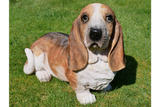 Resin Basset Hound Dog