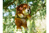 Swinging Tree Puppy 4