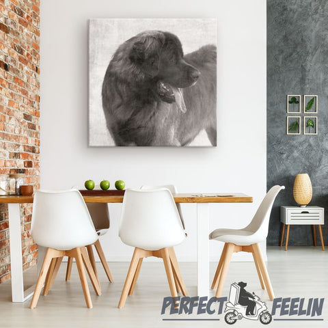 Bruno the Naughty Leonberger Pencil Draw Background Canvas