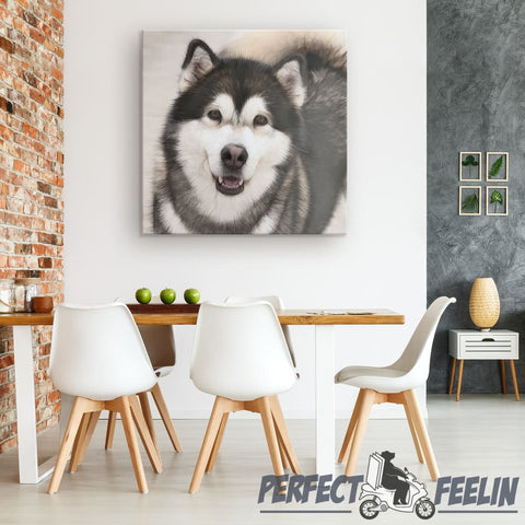 Dakota the Happy Alaskan Malamute Grey Background Canvas