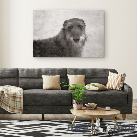 Seamus the Addorable Irish Wolfhound with Grey Background