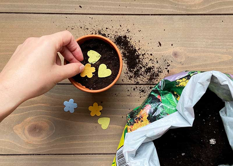 how to get the most out of your seed paper plant in soil cut in pieces