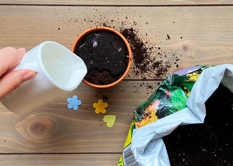 how to get the most out of your seed paper lightly water soil