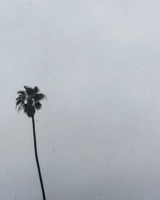 Palm Tree on a Rainy Day