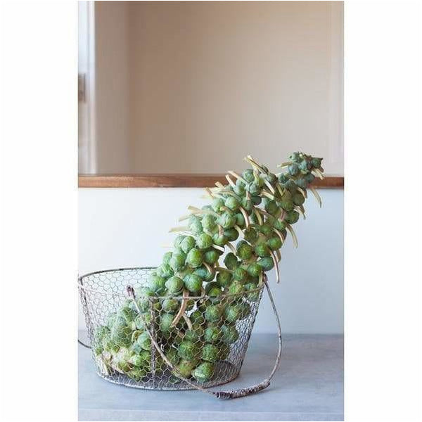Brussel Sprouts – 1 Branch