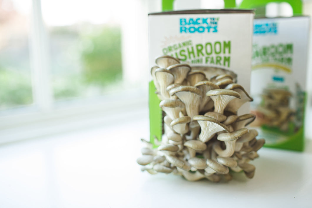 Back to the Roots Organic Mini Mushroom Grow Kit