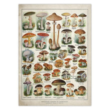 Load image into Gallery viewer, Educational Mushroom Identification Poster