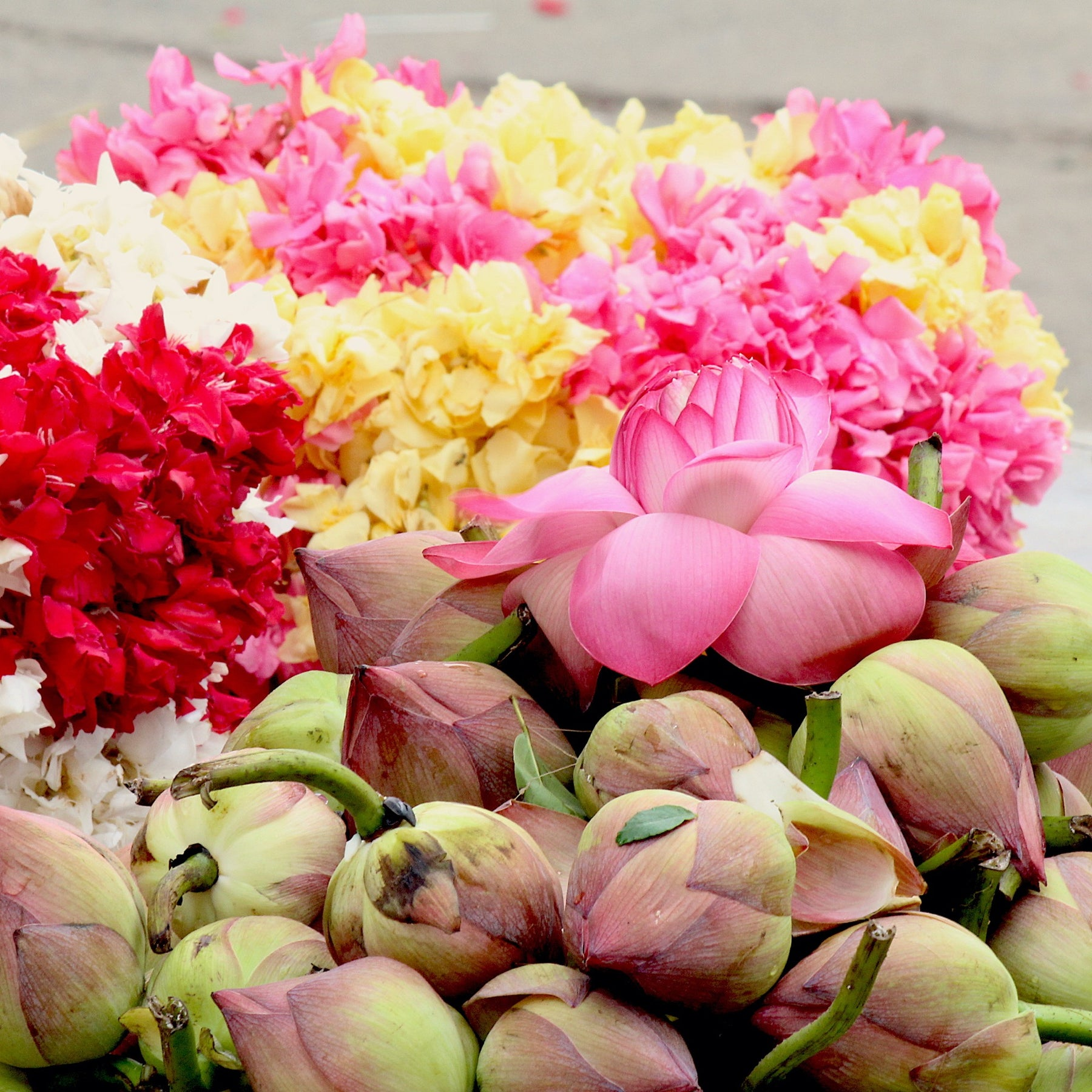 Flowers, Blooms, and Looms… a Visit to Kanchipuram Flower Market