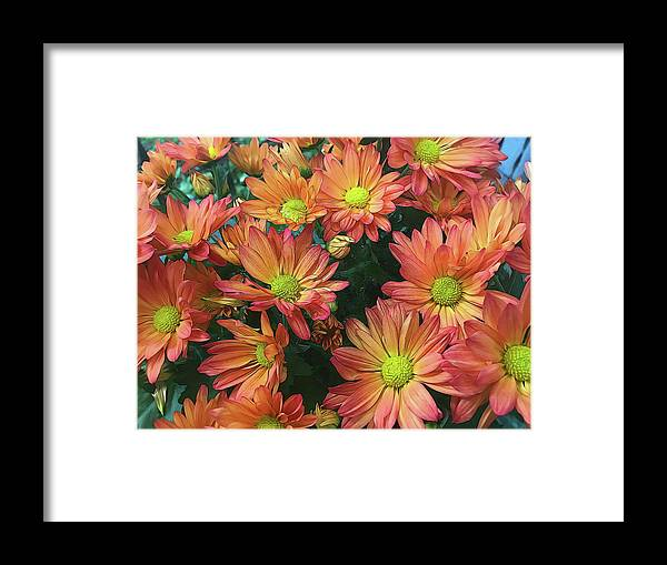 Cream and Pink Fall Flowers - Framed Print